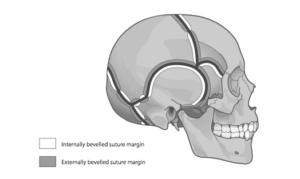 sutural representation